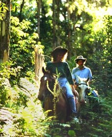 Clarendon Forest Retreat Horse Riding - Accommodation Daintree