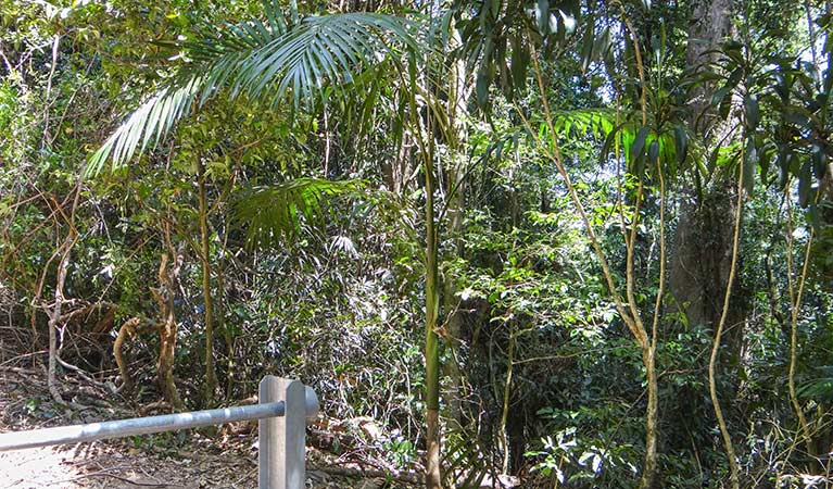 Goorgana walking track - Accommodation Daintree