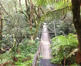 Bemm River Scenic Reserve - Accommodation Daintree