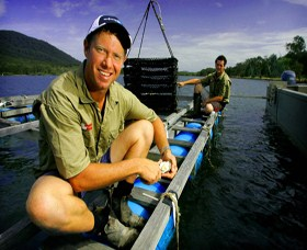 Armstrong Oysters - Accommodation Daintree