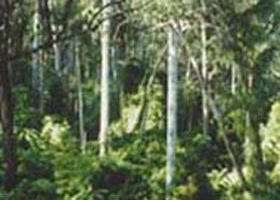 Lind National Park - Accommodation Daintree