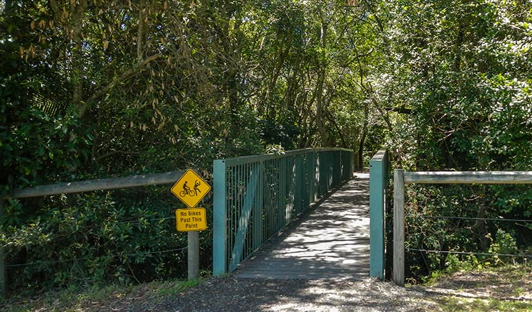 Diamond Head Loop walk - Accommodation Daintree