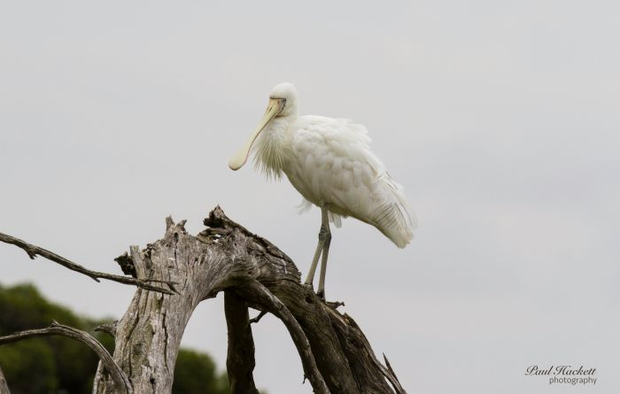 Melbourne Birding Tours - Accommodation Daintree
