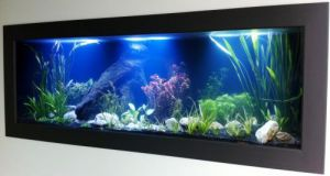 Aquariums in Cairns - Accommodation Daintree