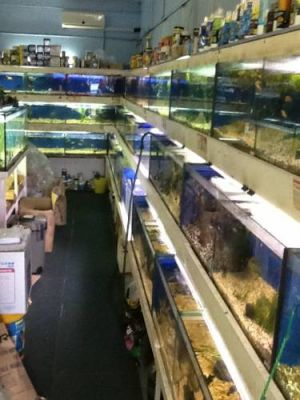 Clearwater Aquariums - Accommodation Daintree