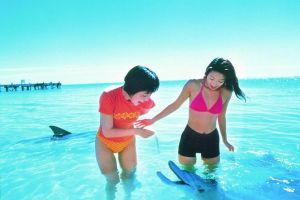 Monkey Mia Dolphins  Shark Bay Air Tour From Perth - Accommodation Daintree