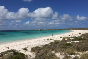 Abrolhos Island Half Day Fly and Flipper - Accommodation Daintree