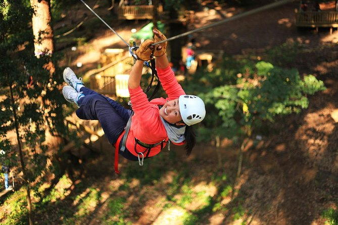 Trees Adventure Lane Poole Park - Treetop  Zipline Experience - Accommodation Daintree