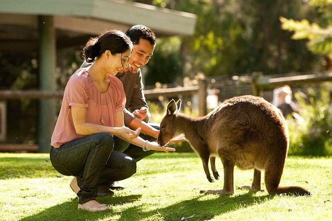 Very Best of Perth Tour - Wildlife Park  City Highlights Tour - Accommodation Daintree