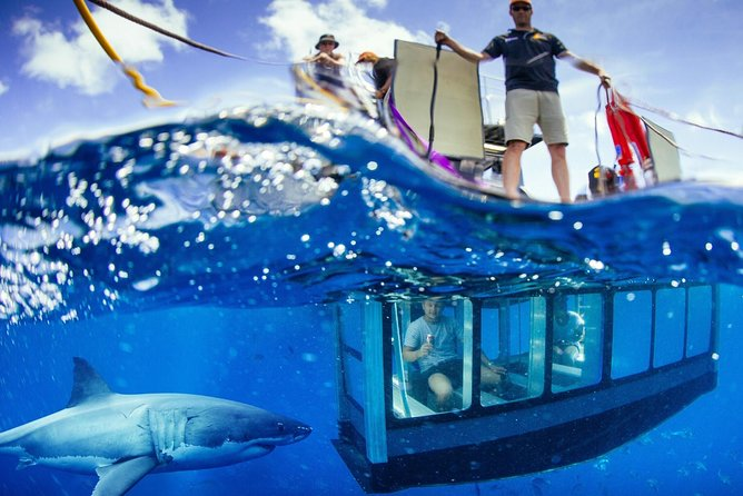 White Shark Tour with Optional Cage Dive from Port Lincoln - Accommodation Daintree
