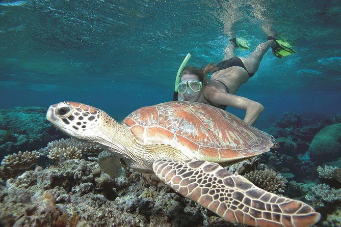 Great Barrier Reef Sailing and Snorkeling Cruise from Port Douglas - Accommodation Daintree