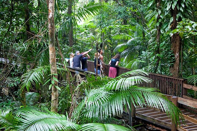 Full Day Daintree Rainforest and Mossman Gorge Tour - Accommodation Daintree