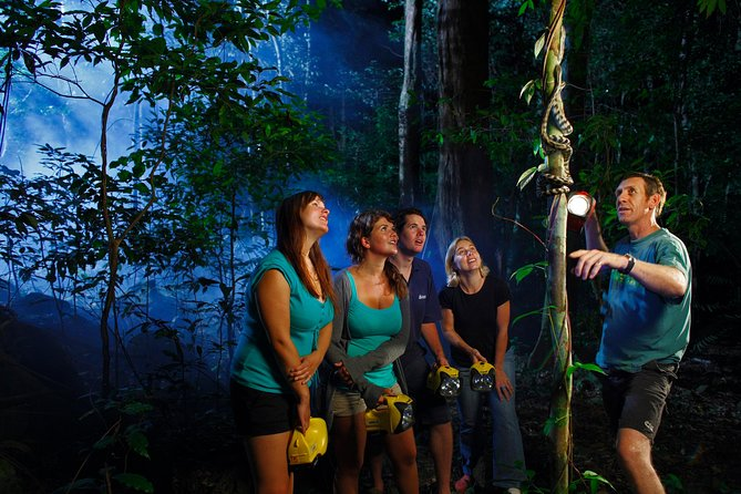 Daintree Rainforest Night Walk from Cape Tribulation - Accommodation Daintree
