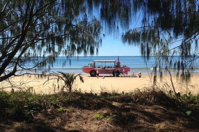 1770 Coastline Tour by LARC Amphibious Vehicle Including Picnic Lunch - Accommodation Daintree