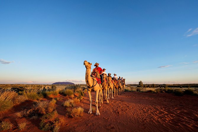 Uluru Camel Express Sunrise or Sunset Tours - Accommodation Daintree