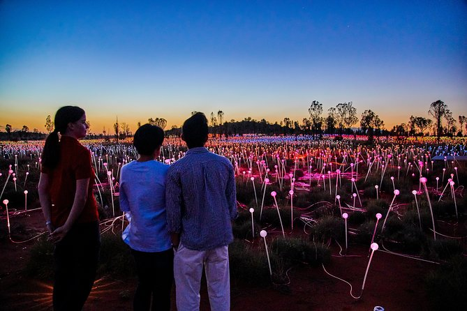 Uluru Field of Light Sunrise Tour - Accommodation Daintree