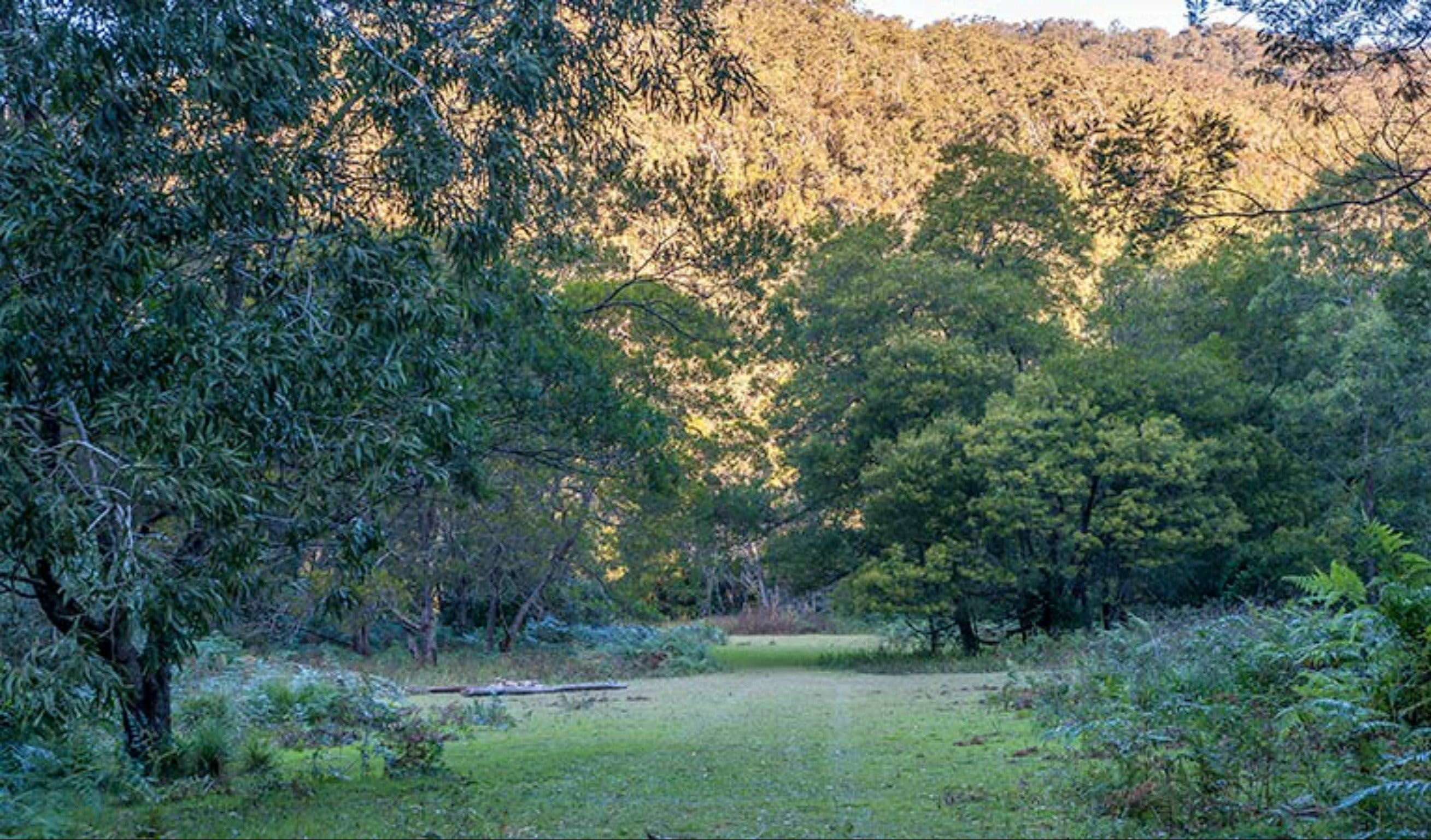 Griffins walking track - Accommodation Daintree