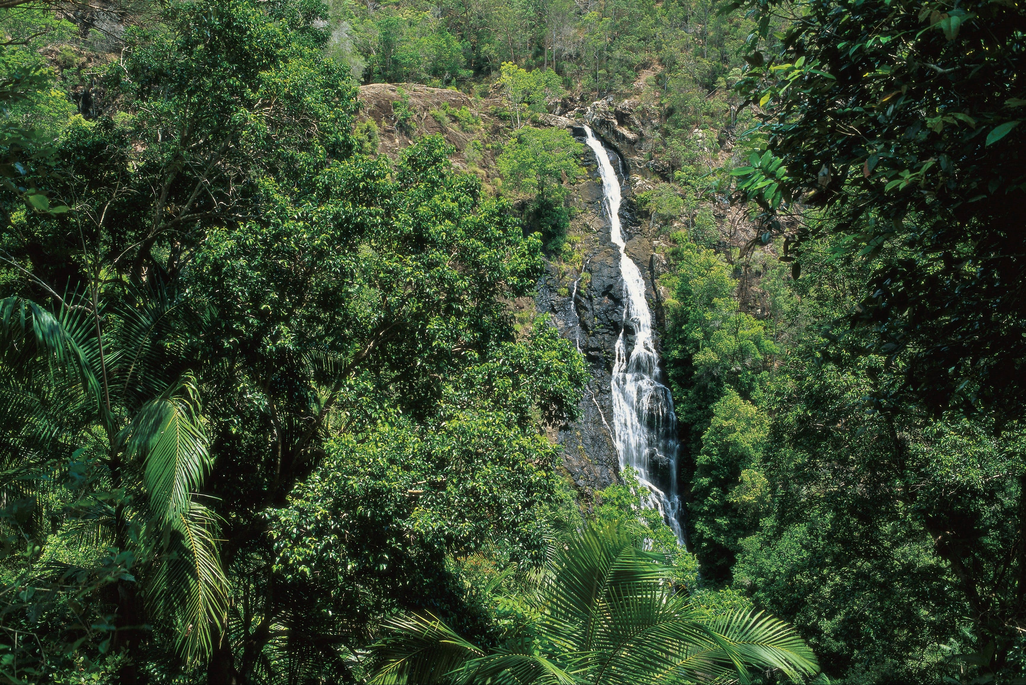 Mapleton Falls National Park - Accommodation Daintree