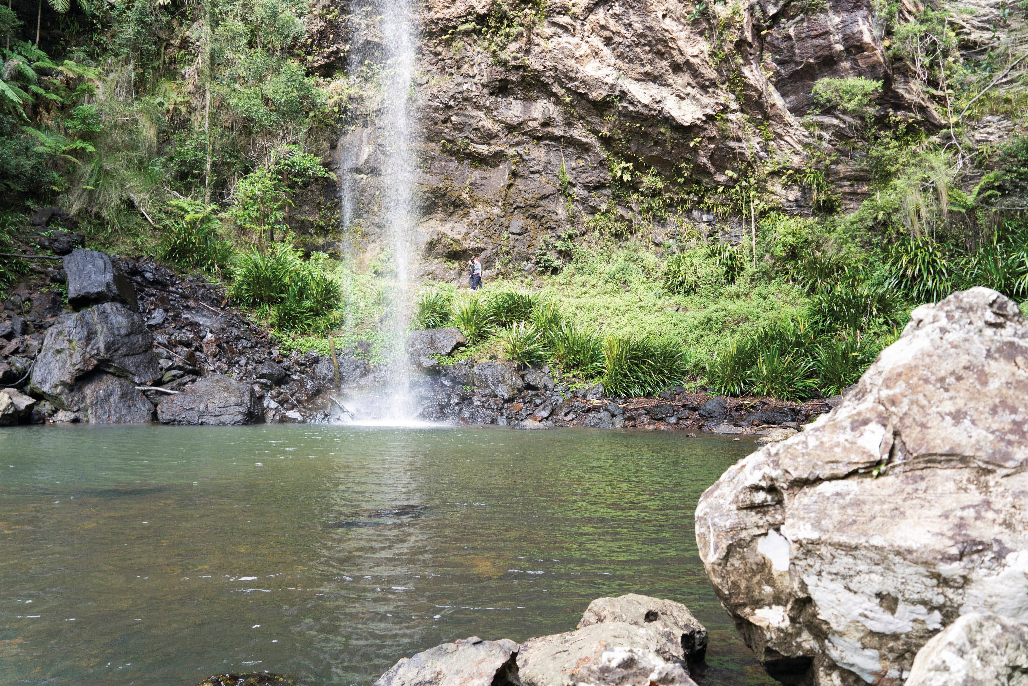 Twin Falls Circuit Springbrook National Park - Accommodation Daintree