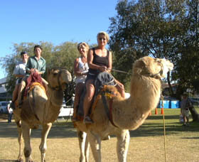 Calamunnda Camel Farm - Accommodation Daintree
