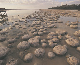 Lake Clifton Thrombolites - Accommodation Daintree