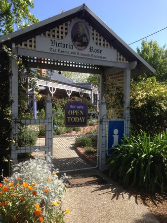 Victoria Rose Tea Rooms - Accommodation Daintree